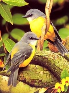 Birds Mobile Wallpaper