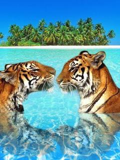 Tiger Sea Mobile Wallpaper