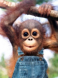 Baby Monkey Mobile Wallpaper