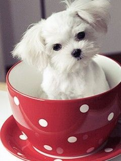 Cup Of Puppy Mobile Wallpaper