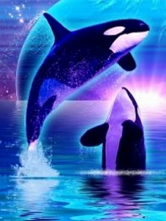 Orca Dreams Mobile Wallpaper