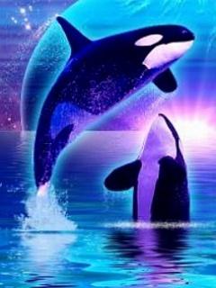 Download Orca Dreams Mobile Wallpaper Mobile Toones