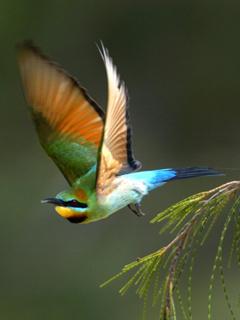 Bird Mobile Wallpaper
