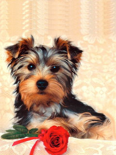 Dog With Rose Mobile Wallpaper