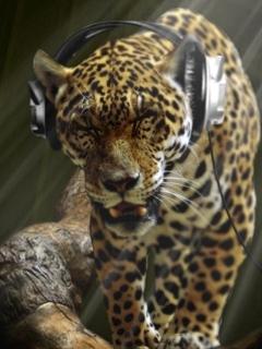 Leopard Mobile Wallpaper