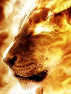Fire Lion Mobile Wallpaper