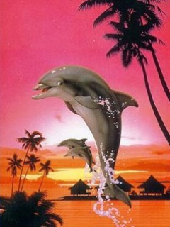 Dolphin Mobile Wallpaper