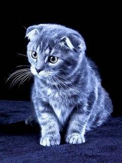 Cool Cat Login