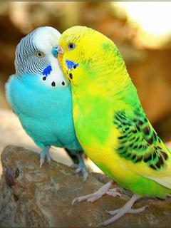 Cute Birds Mobile Wallpaper