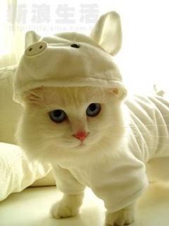 Cute Cat Mobile Wallpaper