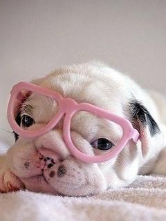Cute Dog Mobile Wallpaper