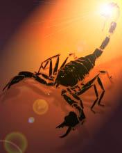 Scorpion Mobile Wallpaper