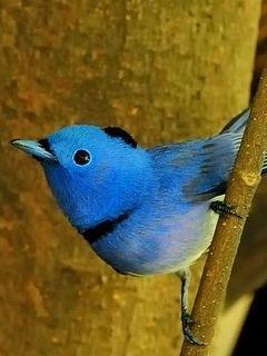 Lovely Bird Mobile Wallpaper