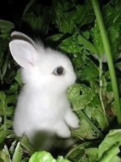 Little Bunny Mobile Wallpaper
