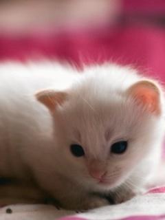Sweet Kitte Mobile Wallpaper