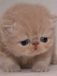 Kitty Cute Mobile Wallpaper