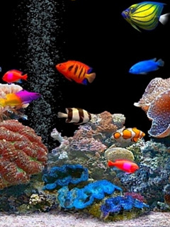 Colorful Fishes Mobile Wallpaper