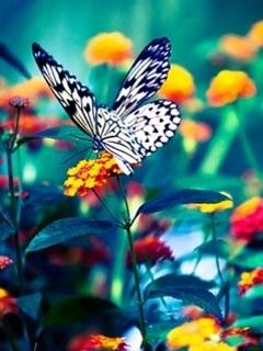 Butterfly Mobile Wallpaper