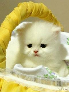 Sad Cat Mobile Wallpaper