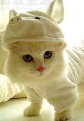 Little Kitty Mobile Wallpaper