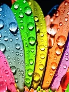Colors Petals Mobile Wallpaper