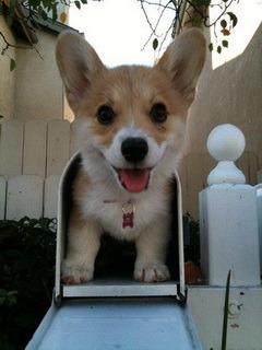 Happy Puppy Mobile Wallpaper