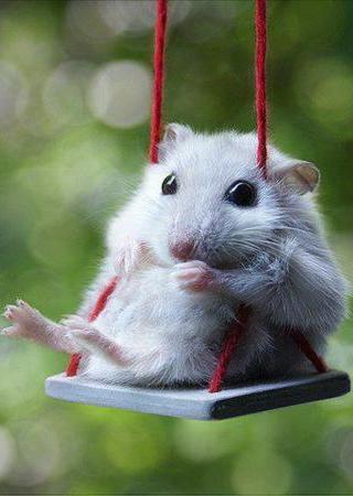 Cute Little Mouse Mobile Wallpaper