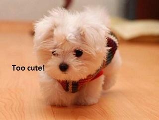 Cutest Puppy Mobile Wallpaper