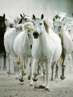 White Horses Mobile Wallpaper