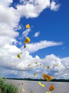 Cute Butterflies Flying Mobile Wallpaper