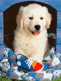 Puppy With Shoes Mobile Wallpaper