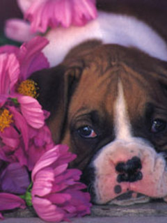 Dog With Purple Flower Mobile Wallpaper