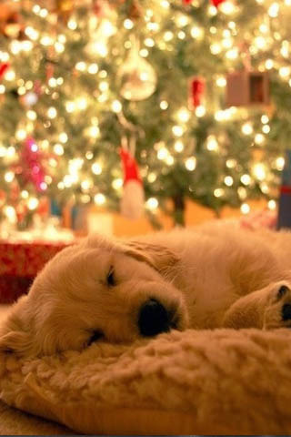 Cute Xmas Pup Mobile Wallpaper