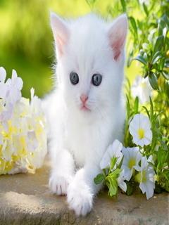 White Cute Animal Kitten Mobile Wallpaper