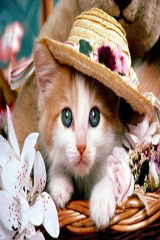 Cute Little Kitten Mobile Wallpaper