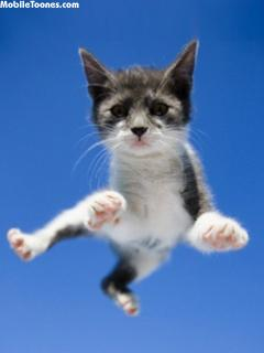 Cat Jump Mobile Wallpaper