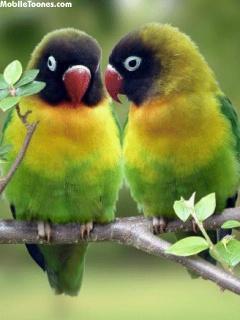 Love_Birds Mobile Wallpaper