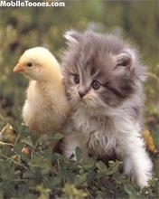 Cat N Chick Mobile Wallpaper