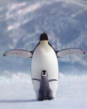 Penguin Mobile Wallpaper