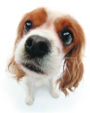 Dog Worried Mobile Wallpaper