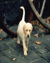 Dog 15 Mobile Wallpaper