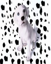 Dog 21 Mobile Wallpaper