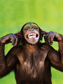 Funny Monkey Mobile Wallpaper