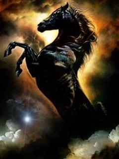 Black Horse Mobile Wallpaper