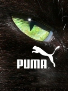 Puma Mobile Wallpaper