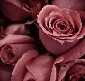 Dusty Rose Mobile Wallpaper