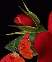 Flower-Rose Mobile Wallpaper