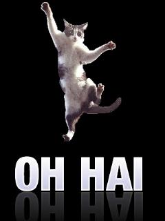 Oh Hai Cat Wallpaper Mobile Wallpaper