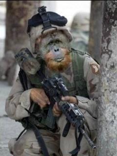 Army Monkey Mobile Wallpaper