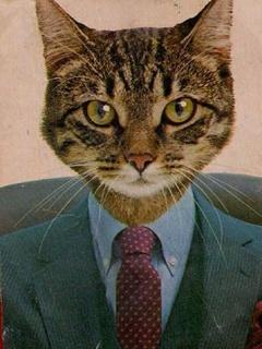 Senior Cat Mobile Wallpaper